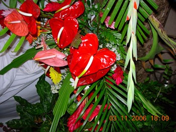 Philandsaifaleewedding Mauritius Oct To Nov 2006 Seta Colinmarkmatt 0078